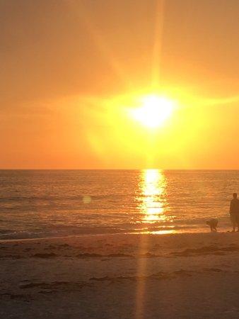 Beach Side Palms: photo1.jpg