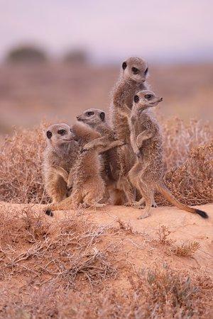 写真Meerkat Adventures枚