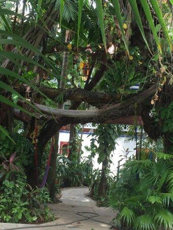 Eco-Hotel El Rey Del Caribe: Interior courtyard leading to rooms