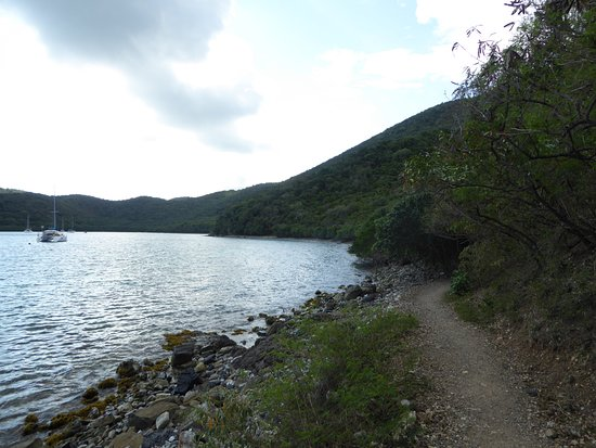 Leinster Bay: Path