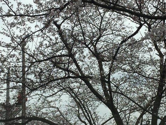 Shikokuchuo, Japan: photo0.jpg