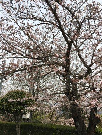 Shikokuchuo, Japan: photo1.jpg