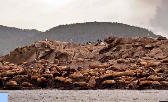 Mayne Island, Kanada: Kayak tours Sealion rocks