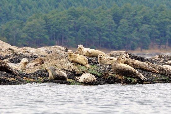 Mayne Island, كندا: Kayak tours 