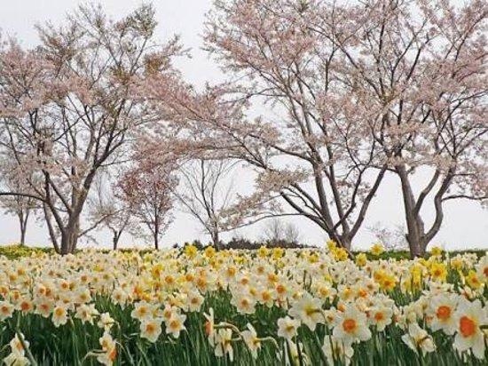 Setana-cho, اليابان: photo1.jpg