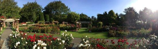 Invercargill, Selandia Baru: Rose Garden bathing in the sun.