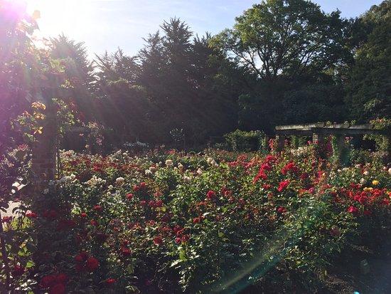 Invercargill, Selandia Baru: Roses Roses Roses
