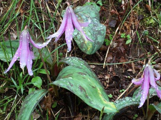 Izumi Nature Park Natural Boadwalk
