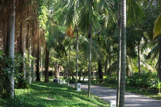 le belhamy resort & spa: Garden