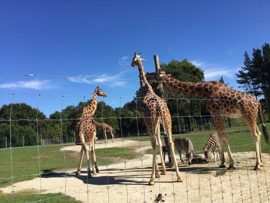 Hamilton Zoo: photo0.jpg