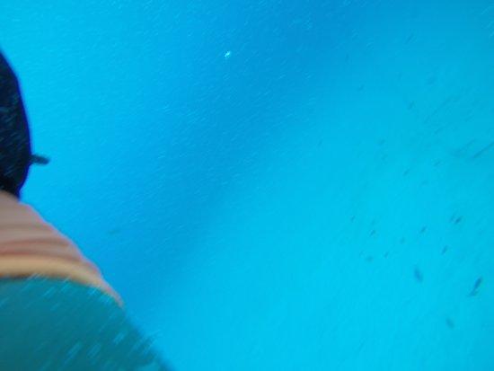 San Andres Divers: tipo de fotos que te ves en tu CD