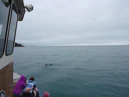 St Mawes, UK: Amazing sight of Harbour porpoises