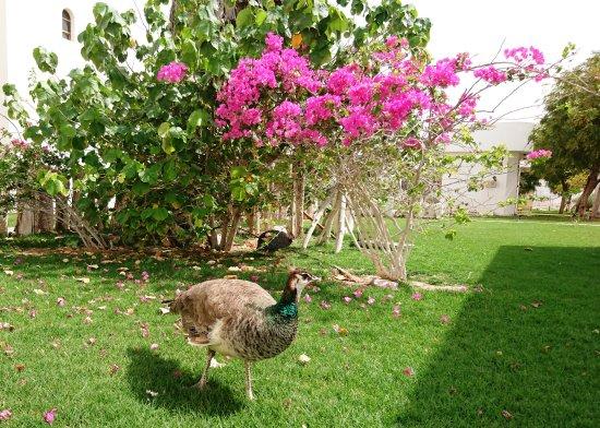Liwa Oasis, Emiratos Árabes Unidos: Grounds (3)