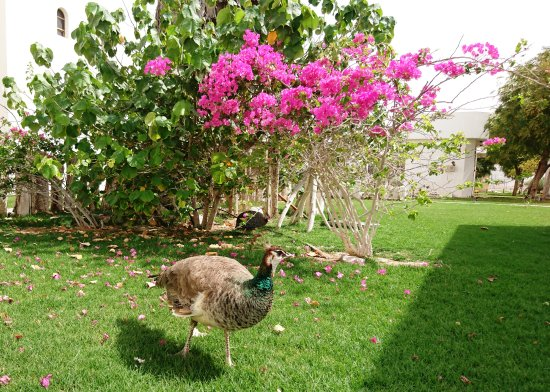 Liwa Oasis, Emirati Arabi Uniti: Grounds (3)