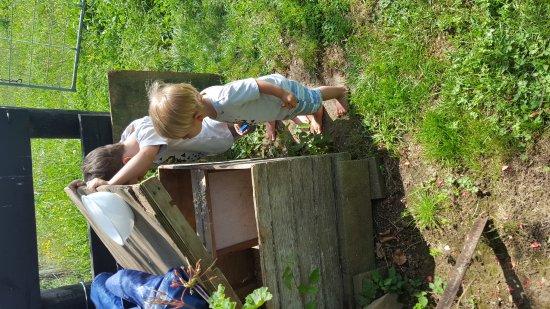 Pirongia, นิวซีแลนด์: Kids love a farm experience - so healthy
