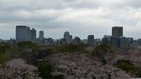 Fukuoka Prefecture, Japón: Kirschblüte