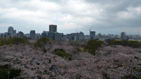 Fukuoka Prefecture, Japan: Kirschblüte