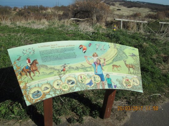Gullane, UK: Facts about the beach worth reading