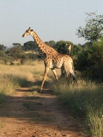 Brits, Südafrika: Marvellous Magical Mziki