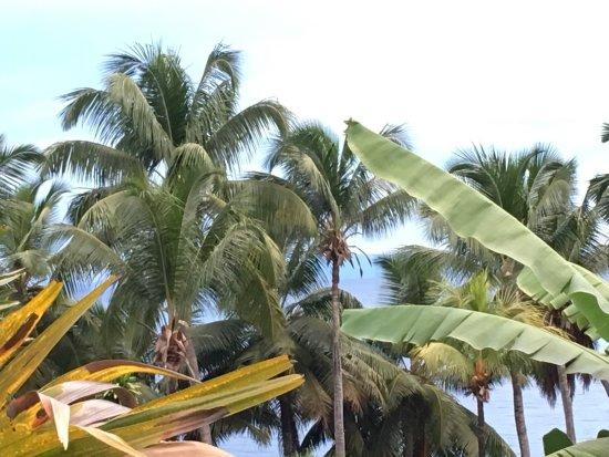 Анс-Буа-де-Роуз, Сейшельские острова: photo0.jpg