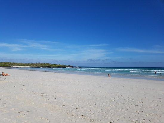 Galapagos Beach at Tortuga Bay : Vista Tortuga Bay