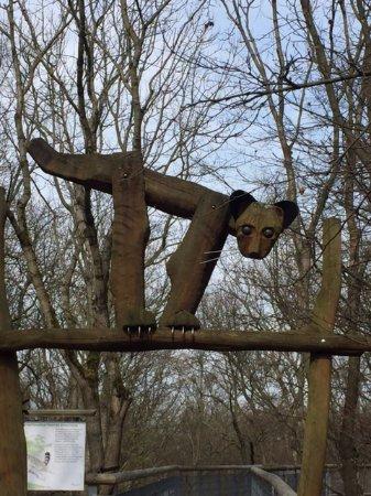 Bad Langensalza, Γερμανία: Auf dem Baumkronenpfad