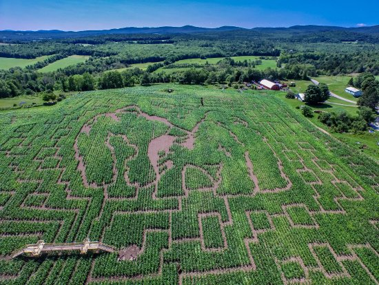 Danville, VT: 2015 Gorilla Maze Design - showing some of our 100' of bridges.