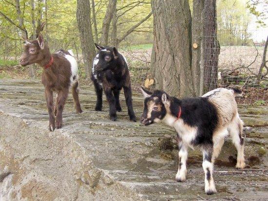 แดนวิลล์, เวอร์มอนต์: Friendly petting zoo stafff