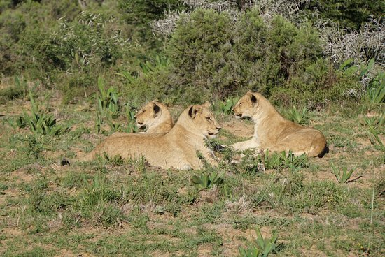 Shamwari Game Reserve Lodges: photo0.jpg