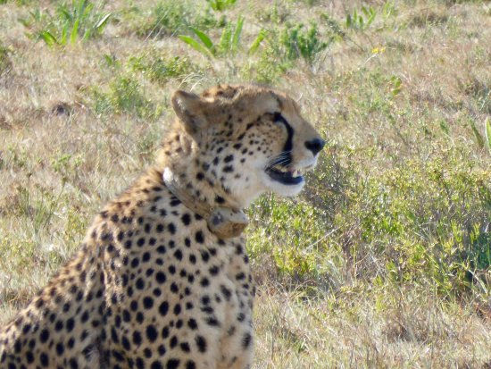 Amakhala Game Reserve, South Africa: Amazing game viewing
