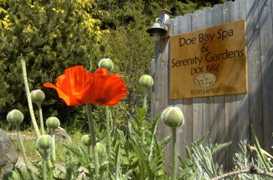 Olga, WA: The Doe Bay Spa and Serenity Gardens!