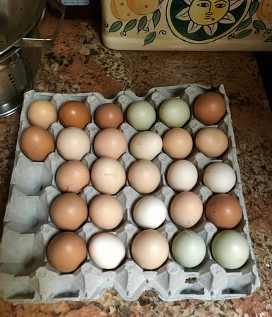 Lilikoi Inn: Fabulous free range chicken eggs!
