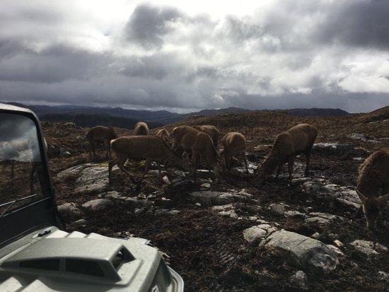 Lochcarron, UK: Reraig Forest