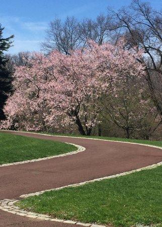 Wayne, PA: Chanticleer blossms