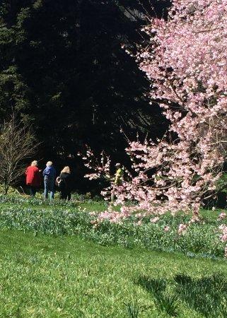 Wayne, PA: Visitors admitting blossoms