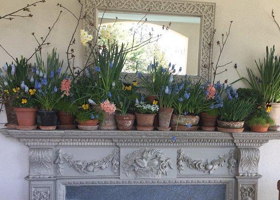 Wayne, PA: Indoor spring arrangement