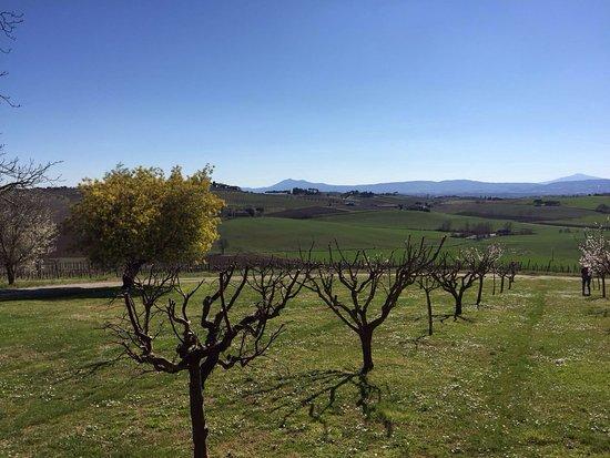 Weingut Avignonesi: photo2.jpg