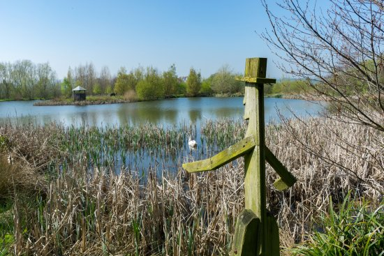 Lower Bruckland Farm Nature Reserve: lake