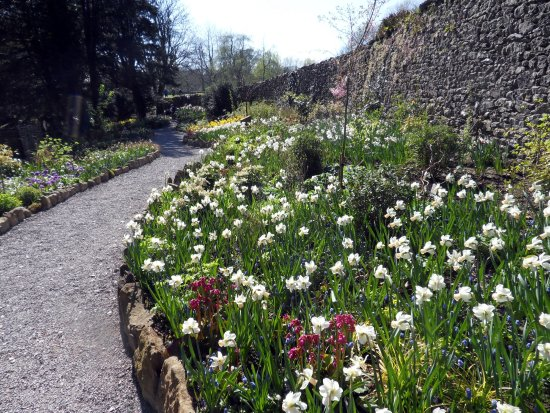 Kendal, UK: Sizergh Castle, daffodil & hyacinth border