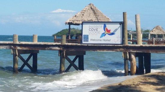 Zdjęcie Parrot Cove Lodge