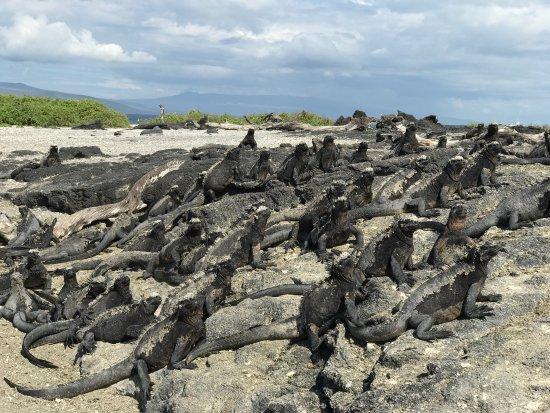 Galapagos Experience: photo0.jpg