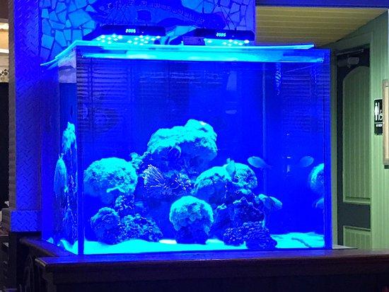 Juno Beach Fish House: photo1.jpg