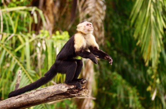 Monkey Lodge Panama : photo4.jpg