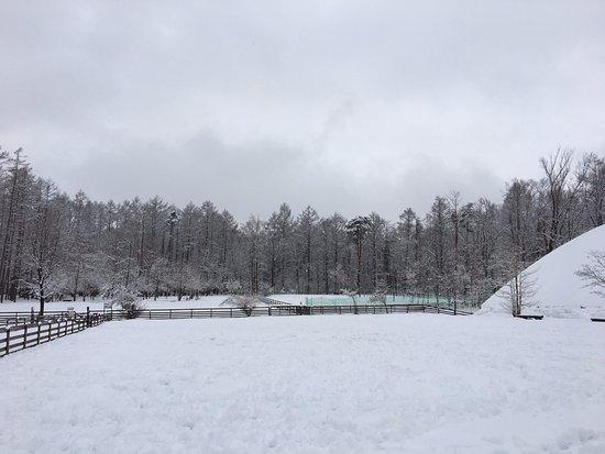 Minamitsuru-gun, Japón: 雪のドッグラン