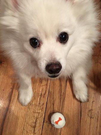 Sprinkles Doggy cupcakes (