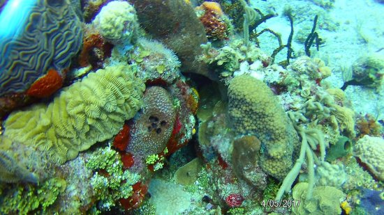 Sand Dollar Sports Diving: Scuba Diving photos from Yucab & Paradise