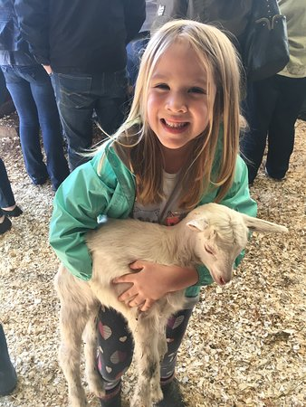 simmons farm petting zoo middletown 2018 all you need to know