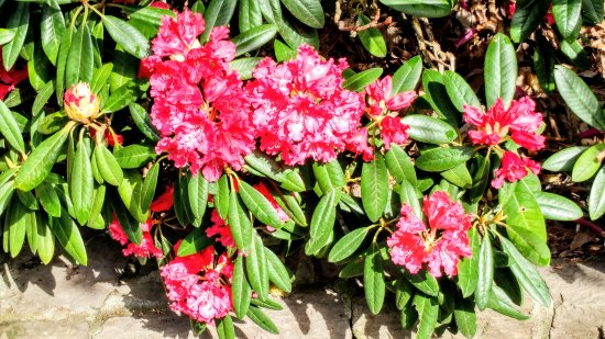 Crystal Springs Rhododendron Garden: 0408171116_HDR_large.jpg