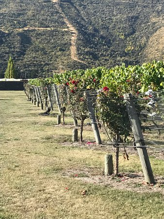 Appellation Central Wine Tours: photo0.jpg