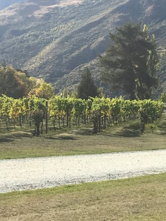 Appellation Central Wine Tours: photo1.jpg